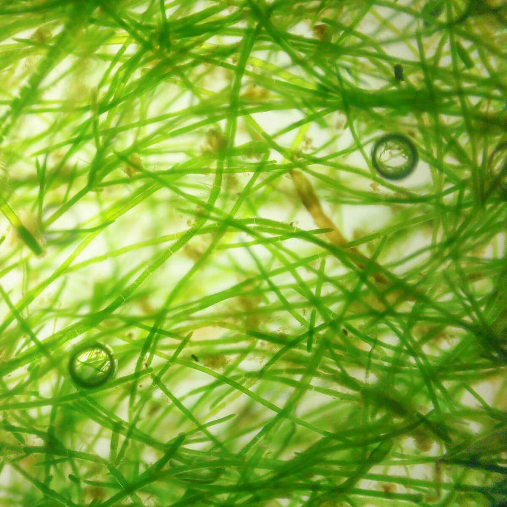 Área de cultivo de microalgas