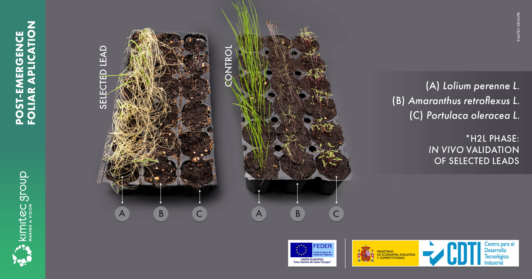 Foliar contact treatment during weed post-emergence