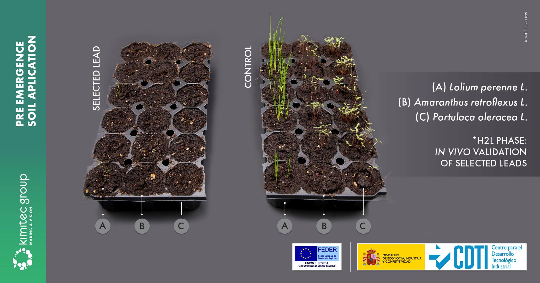 Tratamento via irrigação napré-emergência das ervas daninhas