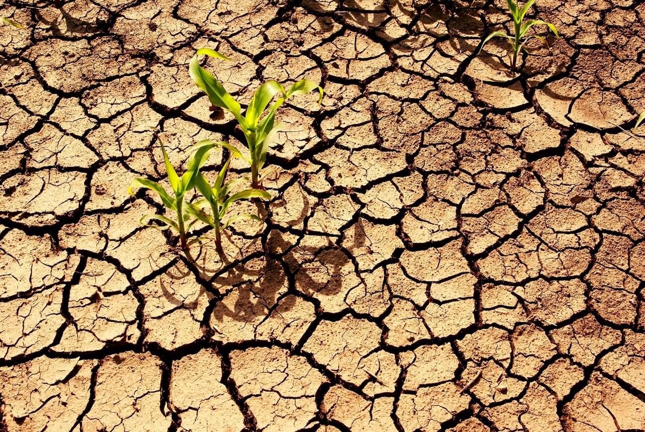 How does drought affect agriculture?