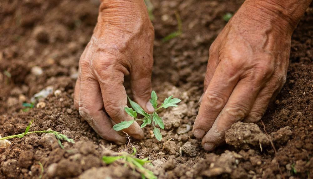 Biopesticides: A low-risk solution
